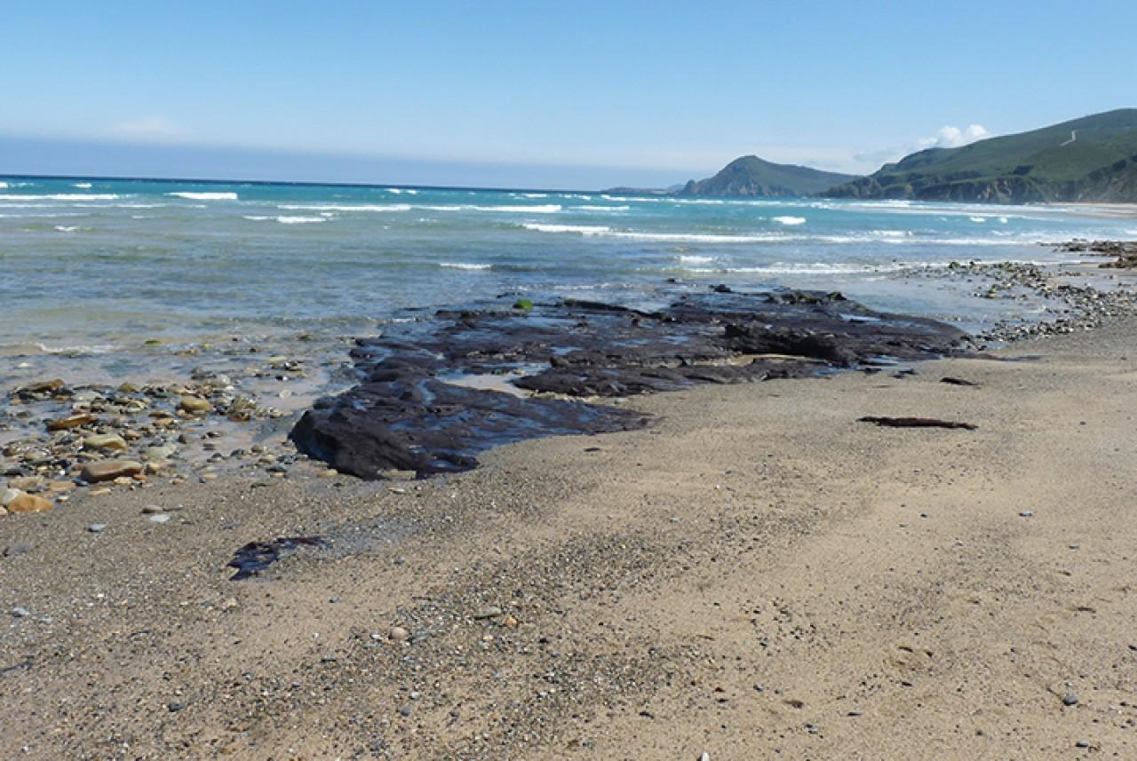24_bosque_carbonizado_playa_ponzos_2020